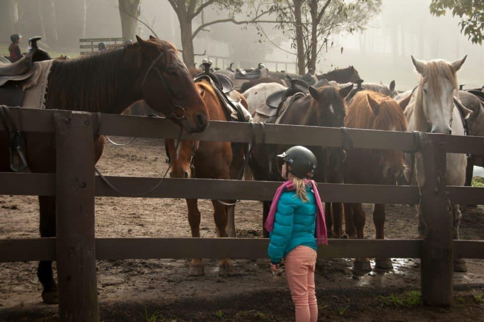 Horse Crazy – Anja Schwanhäußer über das Phänomen Pferdemädchen
